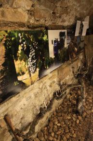 Musée de la truffe et du vin - Richerenches