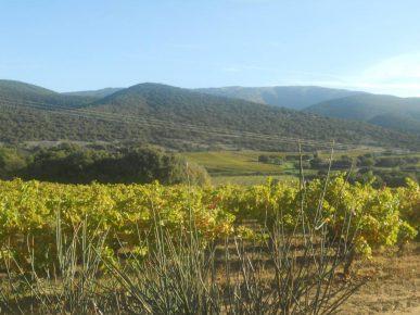 blog rando montbrison vue champs de vignes LD