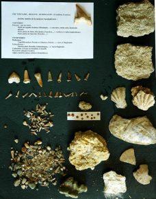 Panneau fossiles sablière