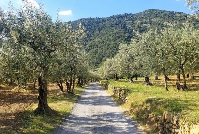 Drôme Provençale à Grignan - 0