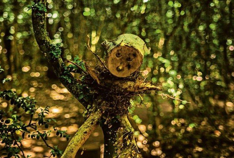 La Forêt d'Emile Zarbre à Saint-Remèze - 3