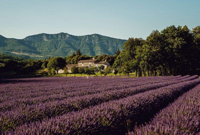 Le Mas de La Lance à Roche-Saint-Secret-Béconne - 11
