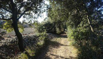 Sentier Taulignan