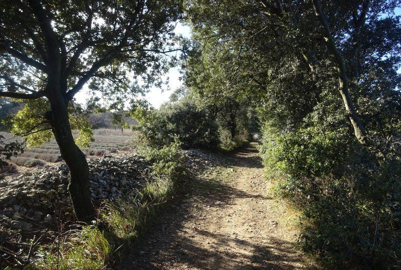 Sentier VTT Entre Bois & Ravins à Taulignan - 0