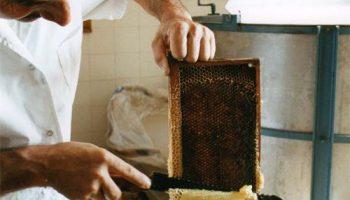 Délices au miel