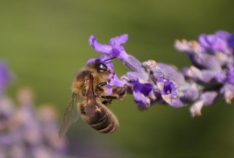 Miellerie des Délices au Miel à Roussas - 2