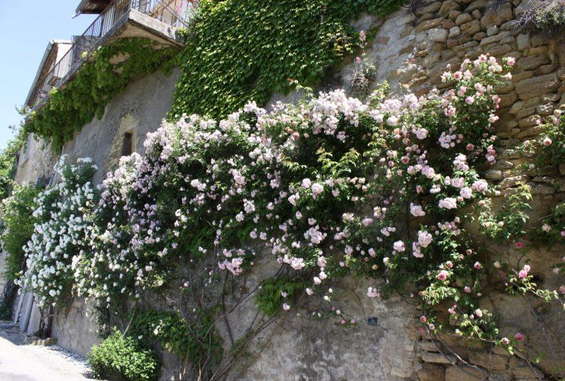Association Grignan Pierres et Roses Anciennes à Grignan - 1