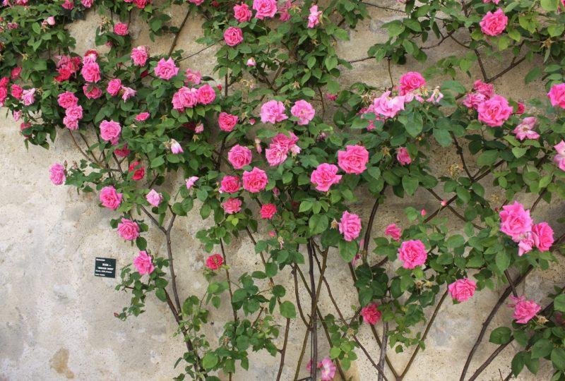 Association Grignan Pierres et Roses Anciennes à Grignan - 2