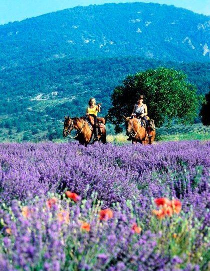 Les Ecuries de la Drôme Provençale à Grignan - 0