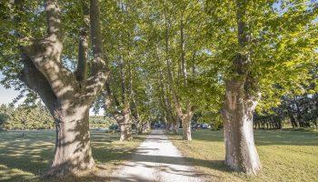 Le Mas de Loisonville – Grillon
