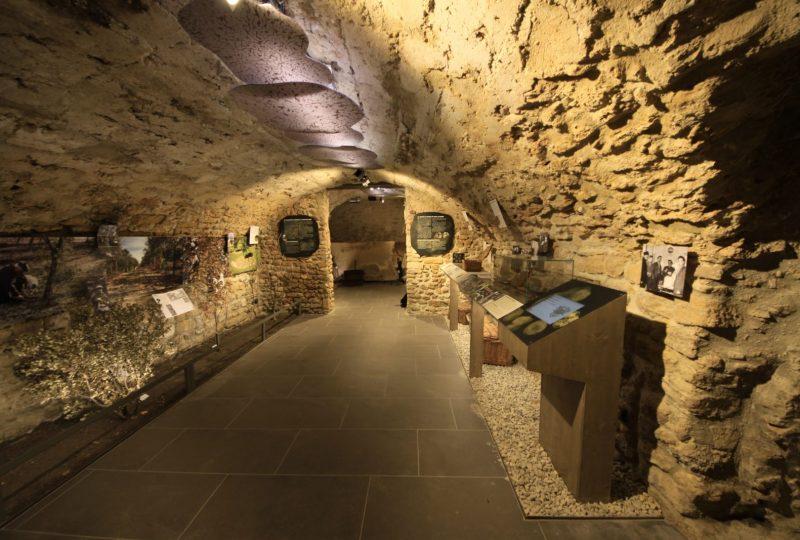 Musée de la truffe et du vin à Richerenches - 3