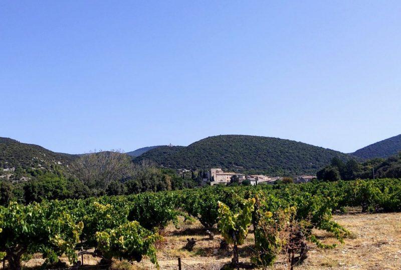 Domaine La Bouvaude à Rousset-les-Vignes - 3