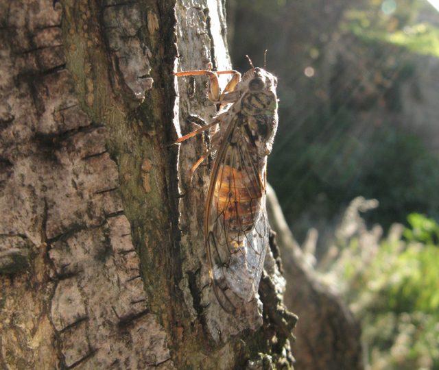 Le Naturoptère à Sérignan-du-Comtat - 3