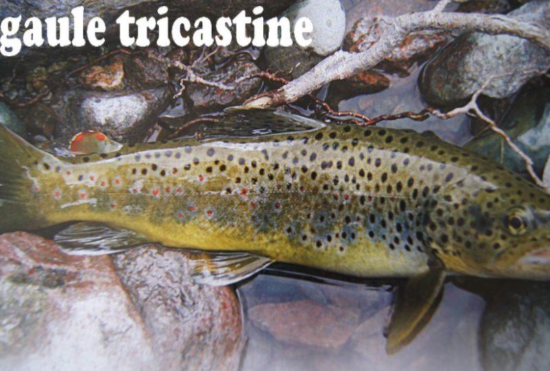 Association La Gaule Tricastine à Taulignan - 0