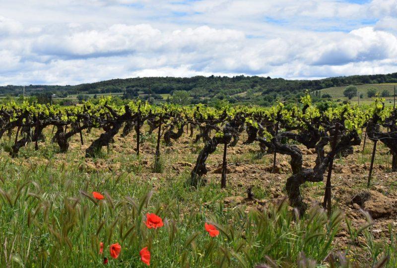 Provence Rêverie à Valréas - 4