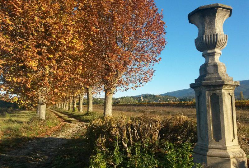 Château Urdy et parc à Saint-Pantaléon-les-Vignes - 4