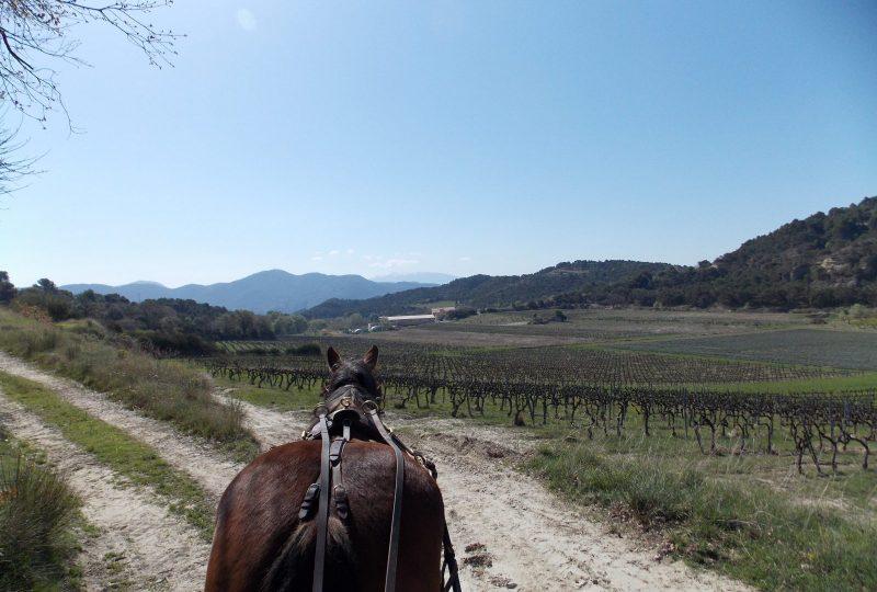 Entre pré-Alpes et vallée du Rhône à Venterol - 1