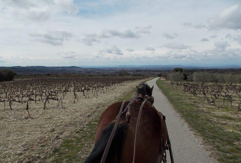 Entre pré-Alpes et vallée du Rhône à Venterol - 2